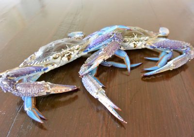 CWS-0120-1 How to Clean Blue Swimmer Crabs